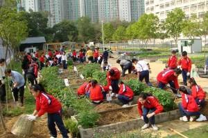 scuola hong kong
